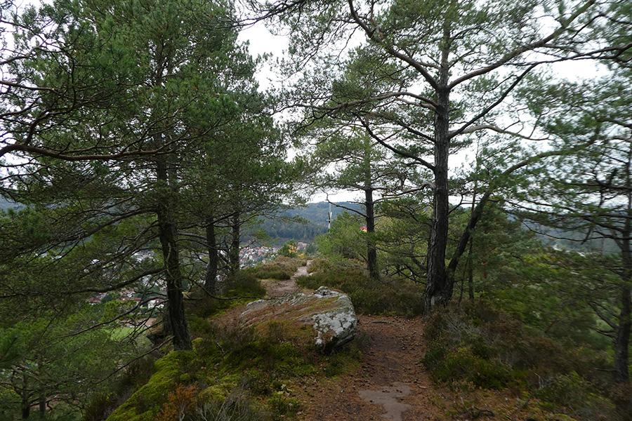 Hauensteiner Höhenweg