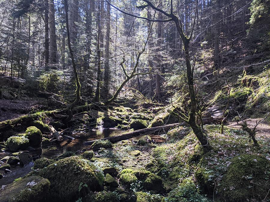 Von Bieselsberg ins wilde Monbachtal – Kürzere Variante